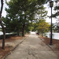 水と緑のオアシス 大濠公園(中之島) 5