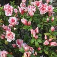 春の角川庭園