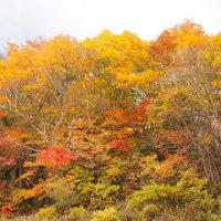 今が見ごろの秋の吾妻スカイライン。