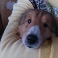 我が家の愛犬ルイ君です。