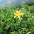 二百名山・新花の百名山 守門岳と八海山登山行