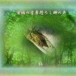 『 無駄死にをするなさせるな蝉の声 』平和の砦交心qs1409