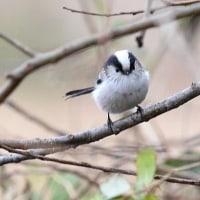 探鳥会つづきの鳥たち