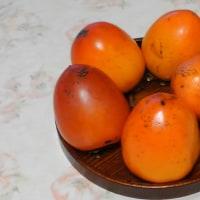 体調を気遣いながら庭仕事をし、渋柿が早く熟すように陽に当てています。