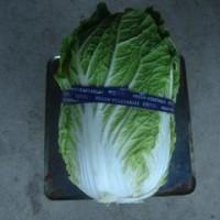 「黄ごころ」白菜