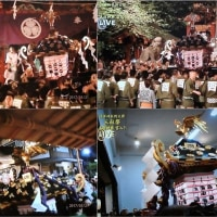 2017 下町に初夏を告げる(浅草三社祭り)その3