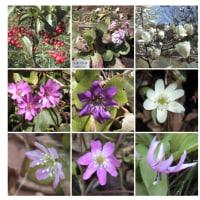 2004-03-21川村美術館。自然林の花が咲いていました。