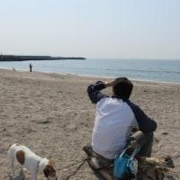 春の布引海岸