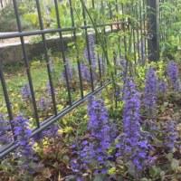 育ち盛りの春の植物