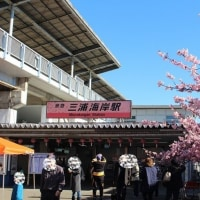 三浦海岸桜まつり(前編)