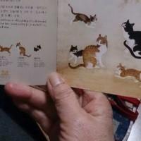 5匹の猫たちとの出会い(命の洗濯④)