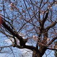 春 「二景」