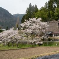 日本茅葺紀行 NO,362 春は美山が花盛り