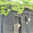 ☆久々に散々な1日〜三島市立公園楽寿園〜