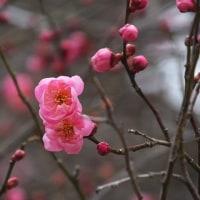 17年3/29~木曽町~花だより