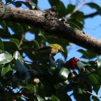 福岡城址の野鳥(2)