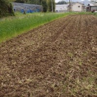 綿,紅花,及び藍の栽培用の畑を耕耘、アマガエル