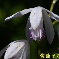 2017/05/28 我が家の庭