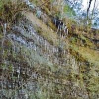 梅ヶ瀬渓谷の氷柱  続き2