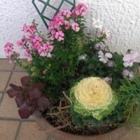 玄関先に飾る寄せ植え鉢-H