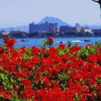 春色のびわ湖畔