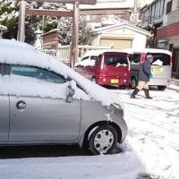 雪でまっしろ!