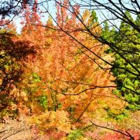 甫喜ヶ峰の紅葉は素晴らしいけれど、強敵にはかなわない