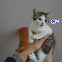 福助(スケ坊)・福千代(フクチョン)5歳になりました~♪