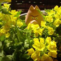 野沢菜の花、、