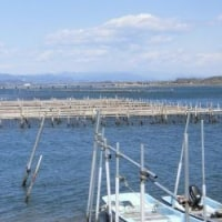 冬の浜名湖 《海苔の養殖棚》