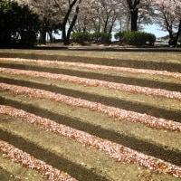 花びらの階段