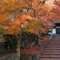 【安楽寺】秋の特別公開のお知らせ(2016年11月3日・5日・6日・12日・13日)