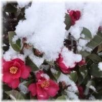 初雪~大雪!