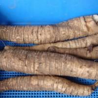 小松菜の移植  雑草の処理