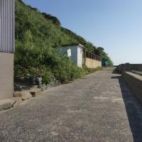 姫島散策3(ヨシ)