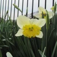 春はもうすぐ!風邪に注意!