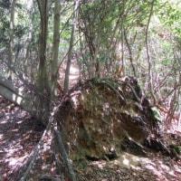 12 二ヶ城山(483m:安佐北区)登山  登山路に倒木が