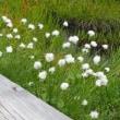 栂池自然園に咲いた花々