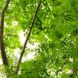 朝の森林浴