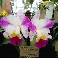 2月23日 福岡洋ラン展に行きました