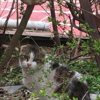 猫まみれ展と尾道の猫