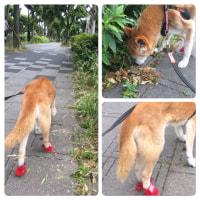 赤い靴のラッキー