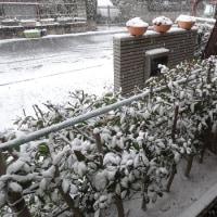何年ぶりかの雪の朝