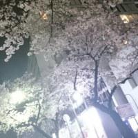 桜の季節ですね!