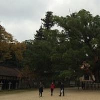 マイントピア別子と大山祇神社