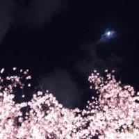 2016年4月16日のチュン(ヂーーッ!ギィーーッ!)