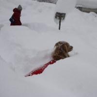 雪遊び旅行④
