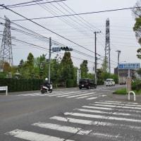 4月21日、小金井公園の上溝桜