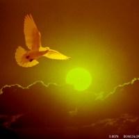 鳥は飛ばねばならぬー坂村真民