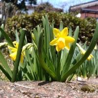 春が来る~春がく~る 僕~らの春が来るぅ~♪